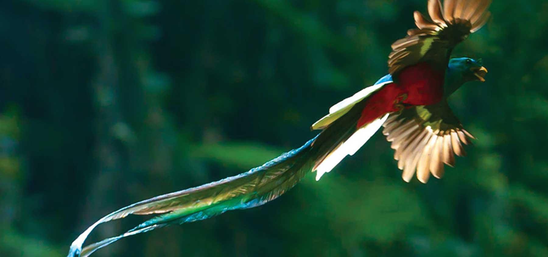 immagine per 6 – Messico e Guatemala – seguendo il quetzal