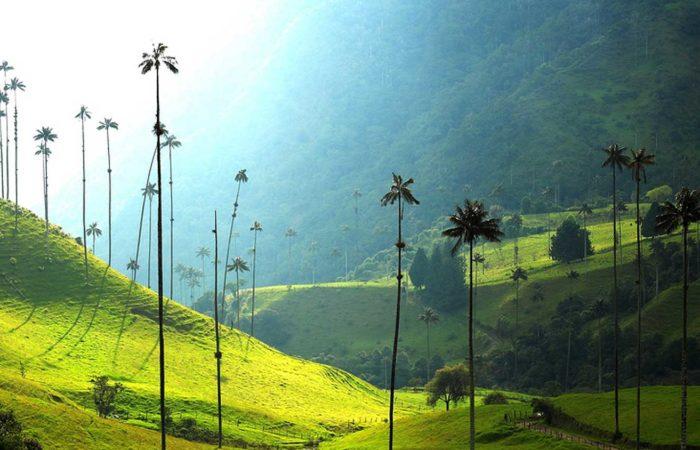 immagine per Tour Colombia e Salento